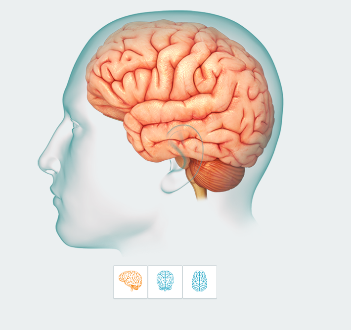 BrainModule